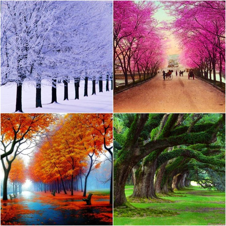1421e8960a26785ab899f01cc05430cb--four-seasons-art-four-seasons-hotel